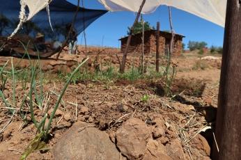 plots under sun-netting at the beginning of growing season