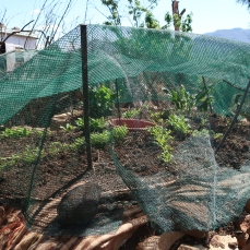 key-hole garden with netting, photo by Kelly Benning