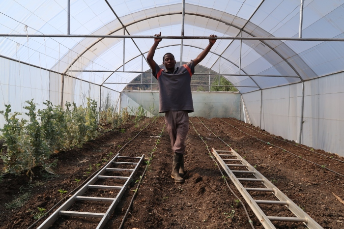 Gardener Mathunya Mahale in the poly-tunnel , photo by Kelly Benning